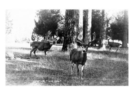 View of Four Deer in the Woods-Lantern Press-Art Print