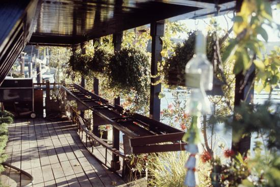 View Of Hanging Plants On The Deck A Floating Home Sausalito Ca 1971 Photographic Print By Michael Rougier Art