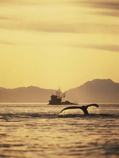 View of Humpback Whale Tail and Fishing Boat, Inside Passage, Alaska, USA-Stuart Westmoreland-Photographic Print