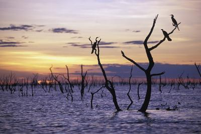 View of Lake Kariba at Sunset-Design Pics Inc-Photographic Print