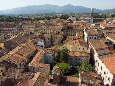 View of Lucca from Torre Guinigi, Lucca, Tuscany, Italy, Europe-Nico Tondini-Photographic Print