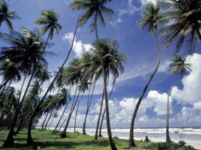 https://imgc.artprintimages.com/img/print/view-of-manzanilla-bay-port-of-spain-trinidad-caribbean_u-l-p3wtk70.jpg?p=0