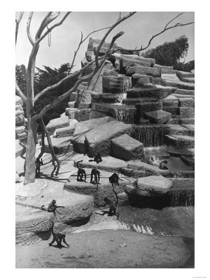 View of Monkey Island at the Zoo - San Francisco, CA-Lantern Press-Art Print