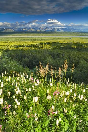 View of Mt Mckinley with Fireweed and Sitka Burnet Flowers-Design Pics Inc-Photographic Print