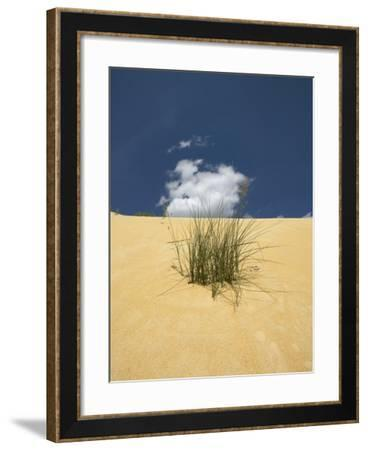 View of plants growing in sand dune--Framed Photographic Print