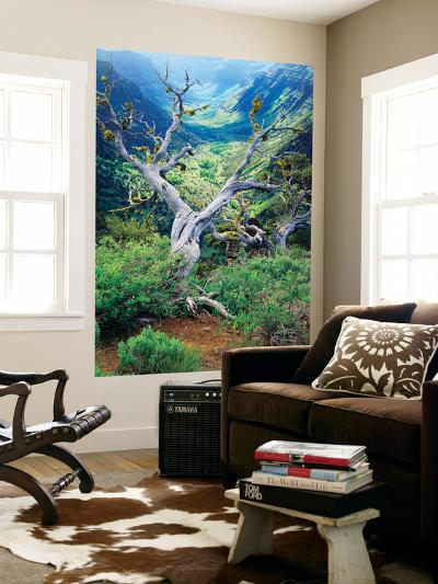 View of Steens Mountain at Little Blitzen River Gorge, Oregon, USA-Scott T^ Smith-Wall Mural