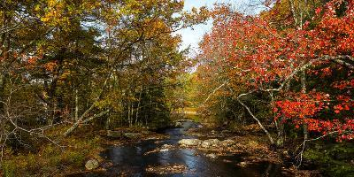 View of stream in fall colors, Maine, USA--Photographic Print