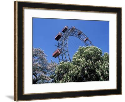 View of the Giant Prater Ferris Wheel Above Chestnut Trees in Bloom, Vienna, Austria-Richard Nebesky-Framed Photographic Print