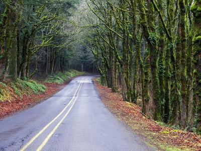 View of the Historic Columbia River Highway-Keith Ladzinski-Photographic Print