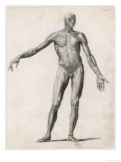 View of the Muscles in the Human Body--Giclee Print