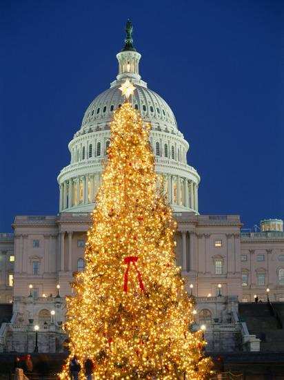 View of the National Christmas Tree Standing Before the Capitol-Richard Nowitz-Photographic Print