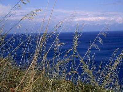 View of the Sea Through Grasses Atop a Hill-Marcia Kebbon-Photographic Print