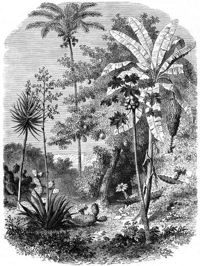 View of the Spanish Main, Guatemala, 1877--Giclee Print