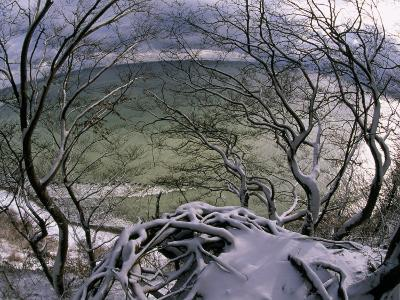 View of the Water Through Snow-Draped Beech Tree Branches and Roots-Norbert Rosing-Photographic Print