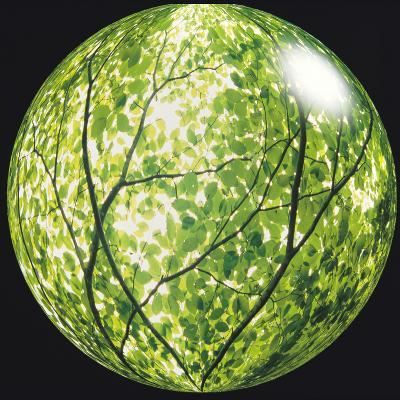 View of Tree in Sphere--Photographic Print