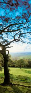 View of tree in valley, Wales