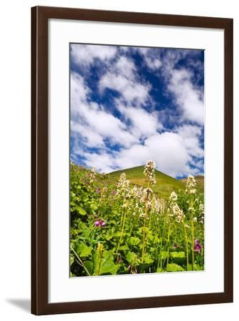 View of Tundra Wildflowers and Altocumulus Floccus Clouds at Thorofare Pass Denali National Park-Design Pics Inc-Framed Photographic Print