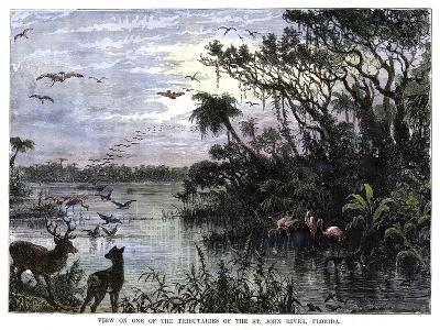 View on One of the Tributaries of the St John River, Florida, 19th Century--Giclee Print