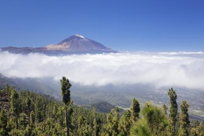 View over Orotava Valley to Pico Del Teide, National Park Teide, Tenerife, Canary Islands, Spain-Markus Lange-Photographic Print