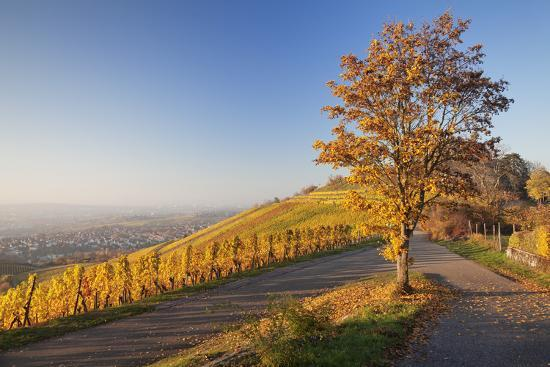View over Stuttgart with the Tomb Chapel, Vineyards at Sundown in Autumn, Germany-Markus Lange-Photographic Print