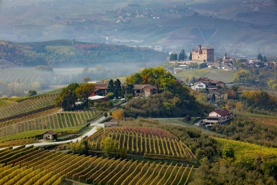 View over vineyards towards medieval town of La Morra, Piedmont, Italy-Brian Jannsen-Premium Photographic Print