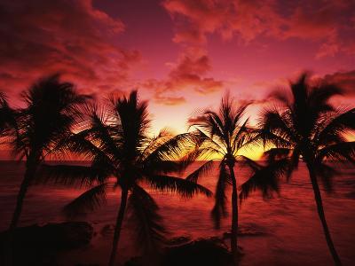 View Palm Trees on Beach, Big Islands, Kona, Hawaii, USA-Stuart Westmorland-Photographic Print