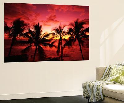 View Palm Trees on Beach, Big Islands, Kona, Hawaii, USA-Stuart Westmorland-Giant Art Print
