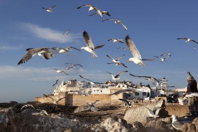 View to the Ramparts and Medina with Seagulls-Stuart Black-Photographic Print