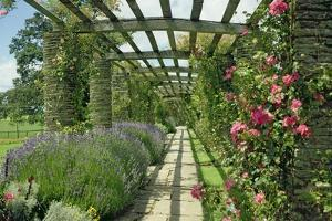 View Westwards Along the Pergola, Designed in C.1904-10