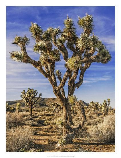 Views of Joshua Tree III-Rachel Perry-Art Print