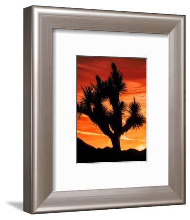 Views of Joshua Tree VI-Rachel Perry-Framed Art Print