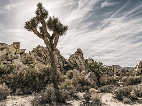 Views of Joshua Tree VIII-Rachel Perry-Art Print