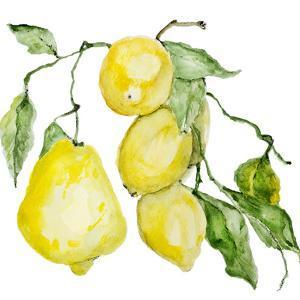 Branch of Ripe Sour Lemons by vilax