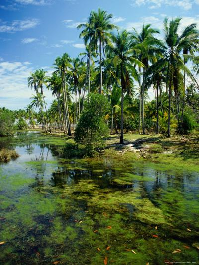 Village and Lagoon, Marang, Terengganu, Malaysia-Richard I'Anson-Photographic Print