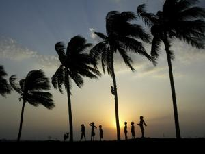 Village Boy Climbs a Coconut Tree as Others Wait Below on the Outskirts of Bhubaneshwar, India