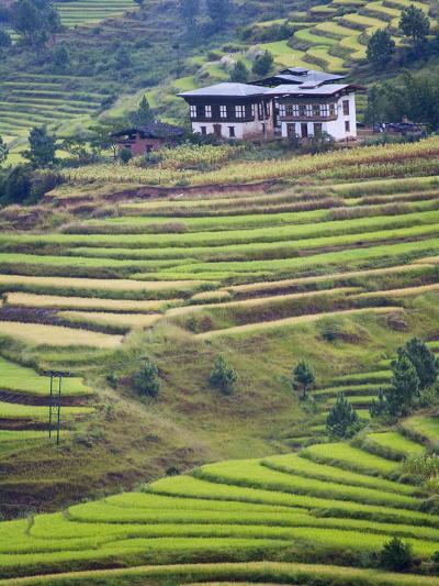 Village House and Rice Terraces in Metshina Village, Bhutan-Keren Su-Photographic Print