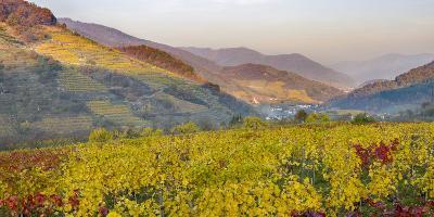 Village Spitz Nested in the Vineyards of the Wachau. Austria-Martin Zwick-Photographic Print