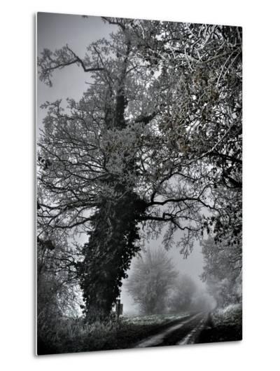 Viloo-Tim Kahane-Metal Print