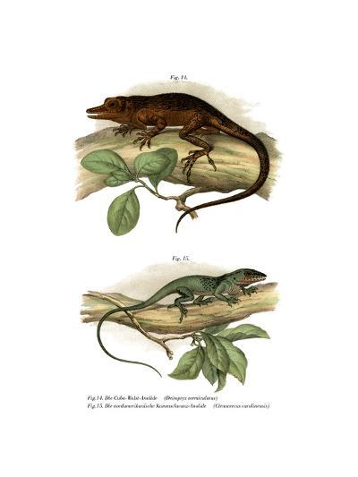 Vinales Anole--Giclee Print