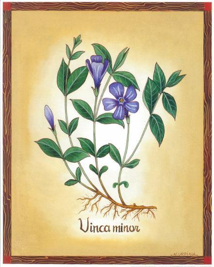 Vinca Minor-Urpina-Art Print