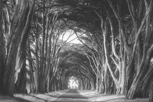 Afternoon Light Cypress Tree Road, Poiint Reyes National Seashore by Vincent James