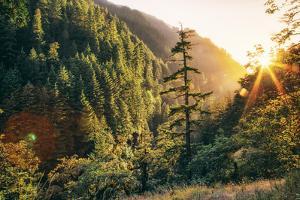 Afternoon Light Eagle Creek Trail - Columbia River Gorge Oregon by Vincent James