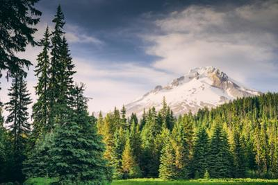 Afternoon Sun at Mount Hood Meadow, Government Camp, Oregon by Vincent James