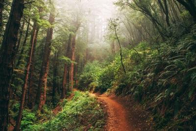 Amazing Misty John Muir Woods Coastal Trail, San Francisco Bay Area by Vincent James