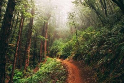 Amazing Misty John Muir Woods Coastal Trail, San Francisco Bay Area by Vincent James