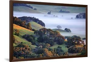 April Morning in the Petaluma Hills, Sonoma County, Northern California by Vincent James