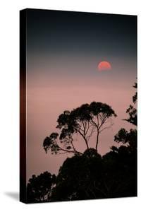 Art Print Sun Tree Oakland Hills at Sunset Elegant Design by Vincent James