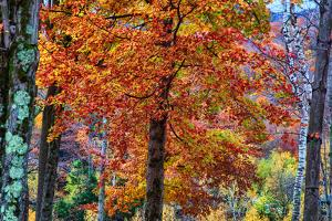 Autumn Color As Paint, New Hampshire, New England Fall by Vincent James