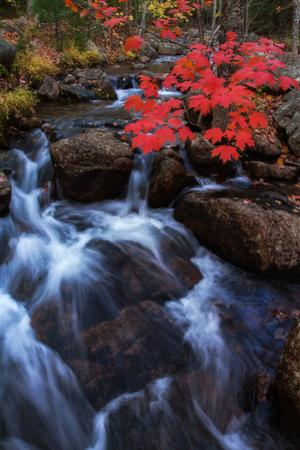 Autumn Color Jordan Steam Bar Harbor Maine Acadia National Park by Vincent James