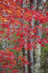 Autumn Design New England by Vincent James